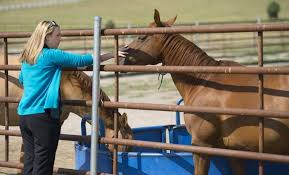 black friday el paso black forest woman sentenced to 60 days in jail for animal cruelty