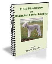 feeding a bedlington terrier dogs u003e u003e bedlington terrier free training course on bedlington