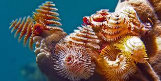 11 surprising species of small marine life diviac magazine