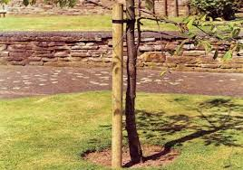 tree stakes tree stakes landscaping poles awbs landscaping and building supplies