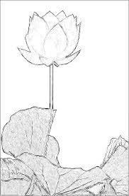 lotus flower sketch black u0026 white imgp5115 lotus flowe u2026 flickr