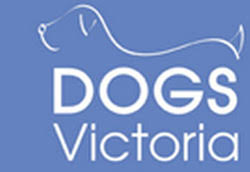 belgian shepherd rescue victoria white swiss shepherd rescue australia home
