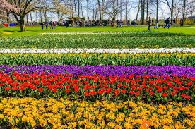 flower garden in amsterdam keukenhof the tulip garden close to amsterdam travel to holland