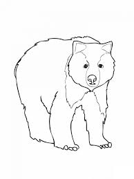 grizzly bear coloring pages click to see printable version of