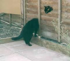 حبايبي القطط Images?q=tbn:ANd9GcQ-3-s0FsWyQxkXdwoWdqn8oX_d31PCRby4WJiKvvw3i_bH6fsEwA