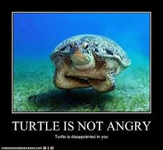 Tumor Meme - cool tumor meme disappoint turtle kayak wallpaper