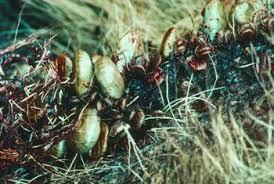 Ticks In Backyard Vinegar To Kill U0026 Prevent Ticks Home Guides Sf Gate