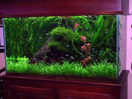 unique aquarium decorations inspirations home furniture ideas