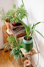 980 best the best of indoor planties images on pinterest indoor
