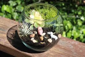 earth day craft for kids make a mini terrarium marin mommies