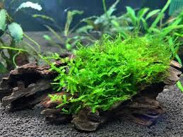 Aquascaping With Driftwood How To Choose Plants For Aquascapes U2013 Beginners U0027 Guide