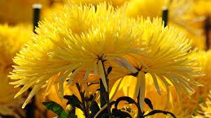 very beautiful flowers walldevil