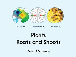 year 3 science rocks full scheme by twotempleplace teaching