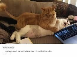 Funny Animal Memes Tumblr - pinterest k a t h e r i n e animals pinterest cat animal and