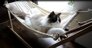 simple cat hammock how to make a kitty hammock cilif com