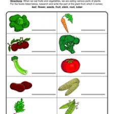 plant parts we eat worksheet plant parts worksheets and plants