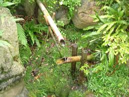 sorte de bambou un an au cm1 15 10 06 22 10 06