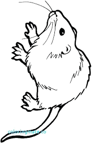 coloring page of a rat rat coloring page smartgoalsbook info