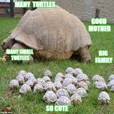 Turtle Memes - turtle meme imgflip