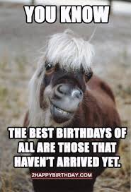 Horse Birthday Meme - happy birthday horse meme funny songs 2happybirthday