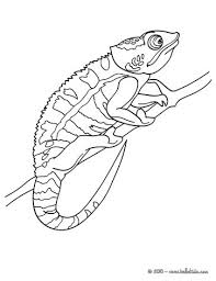 Reptile Coloring Pages 54 Free Reptiles Coloring Pages Online Reptile Coloring Pages