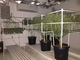 chambre de culture cannabis complete how to grow marijuana and to produce quality buds we you
