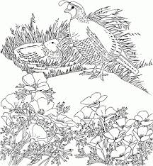 california state flower coloring page simple california state