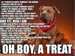 Grumpy Dog Meme - depressed dog meme bodybuilding com forums
