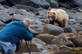 attacked bear