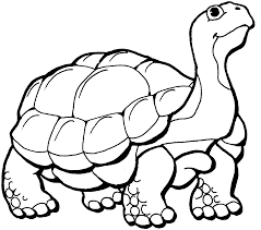 coloring page turtle free turtle coloring pages