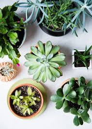 11 low maintenance houseplants how to care for them during