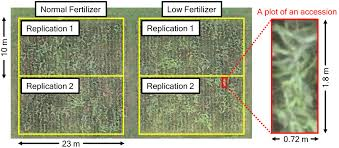 frontiers high throughput phenotyping of sorghum plant height