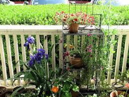 Container Gardening Peas - names of flowers a u003d calibrachoa b u003d iris c u003d osteospermum d