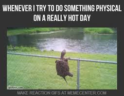 Hot Day Meme - 504 best funny stuff images on pinterest funny things ha ha and
