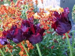 ben pentreath u0027s tulip border tips katy elliott