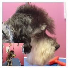 joanie u0027s pet salon llc pet grooming services norman ok