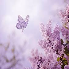 purple flowers purple flowers by peder b helland on