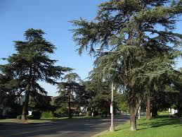 big orange landmarks no 67 cedar trees