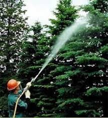 mountain valley tree spraying