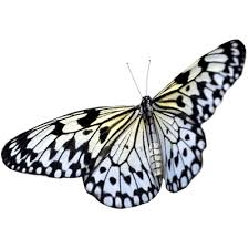 butterfly sideview transparent png stickpng