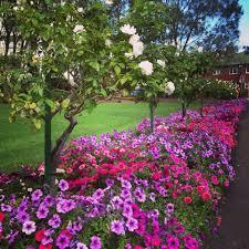 sydney flowers sydney
