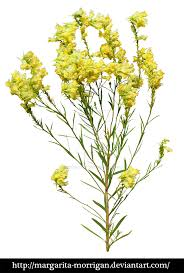 margarita png yellow flowers by margarita morrigan on deviantart
