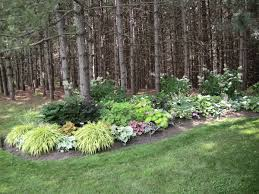 Beauty Garden by Beautiful Hostas Macra Aureola Brunnera Kings Ransom Actaea