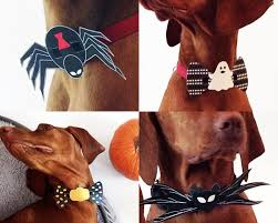 halloween tie 20 accessories your dog needs this halloween u2013 iheartdogs com