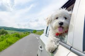 Window Seats For Dogs - a politician proposed a seat belt law for dogs you could hear the