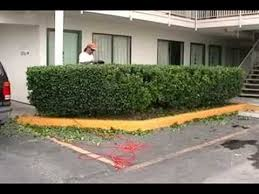 Bushes For Landscaping How To Trim Bushes Fast Motion Landscaping Bush