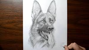 how to draw a dog german shepherd youtube