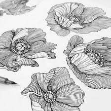 Flower Drawings Black And White - best 25 floral drawing ideas on pinterest future tattoos where