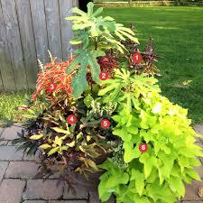 flower garden ideas sun the garden inspirations
