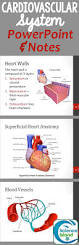 Best 25 Anatomy And Physiology Test Ideas On Pinterest Human